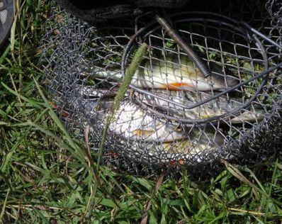 Как сохранить рыбу на рыбалке - основные способы и рекомендации